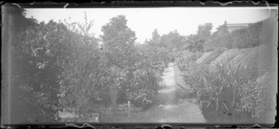 Jardin botanique de Bruxelles : Jardin #1357