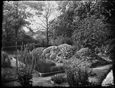 Jardin botanique de Bruxelles : Collection de plantes alpines #0166