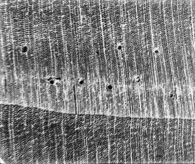 Coupe microscopique de bois #2359