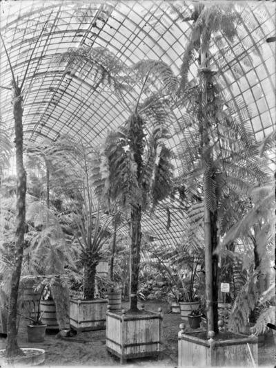 Jardin botanique de Bruxelles : Jardin d'hiver - fougères #0139