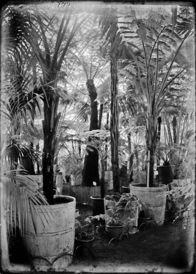 Jardin botanique de Bruxelles : Palais des fougères #0013