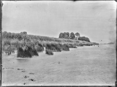 Végétation sur les alluvions vaseuses de l'Escaut, entre Tamise et Rupelmonde, à marée basse #2205