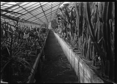 Jardin botanique de Bruxelles : Serre aux plantes grasses #0004