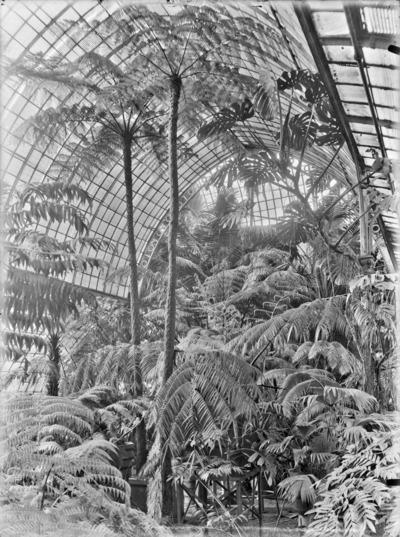 Jardin botanique de Bruxelles : Jardin d'hiver - fougères #0141