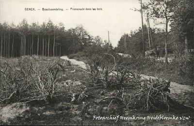 Genck - Boschwandeling - Promenade dans les bois