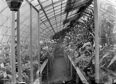 Jardin botanique de Bruxelles : Serre aux orchidées #0035
