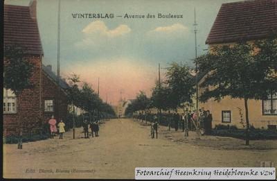 Winterslag - Avenue des Bouleaux