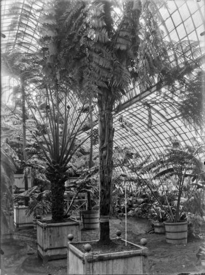 Jardin botanique de Bruxelles : Jardin d'hiver - fougères #1710