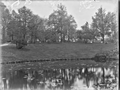 Jardin botanique de Bruxelles : Etang #1712
