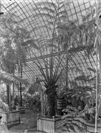 Jardin botanique de Bruxelles : Jardin d'hiver - fougères #0145