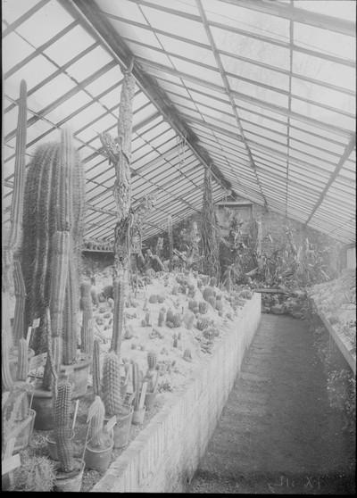 Jardin botanique de Bruxelles : Serre aux plantes grasses #0068