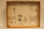 Insectendoos. Insekten op distels, de stengel en de bladeren.