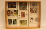 Insectendoos. Araneus diadematus (kruisspin).