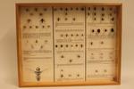 Insectendoos. Asilidae (roofvliegen), Empididae (dansvliegen), Syrphidae (zweefvliegen), Mimicry en Pipunculidae (oogkopvliegen).