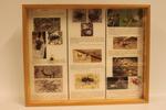 Insectendoos. Araneae (spinnen).