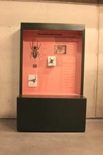 Mobiele museumkast: Arachnida (spinachtigen).
