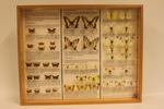 Insectendoos. Lepidoptera: Hesperiidae, Pieridae en Papilionidae.