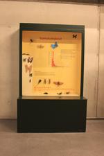 Mobiele museumkast: rariteitenkabinet.