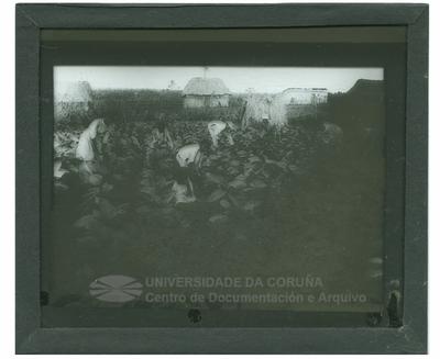 Campo de tabaco en Cuba