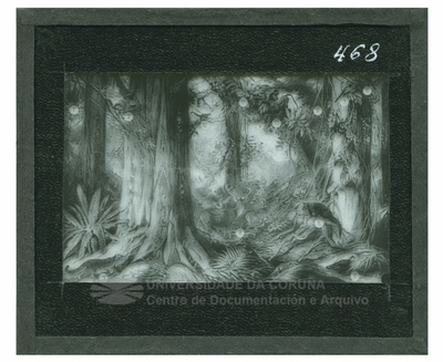 Selva virgen en Biedma (Cudia)