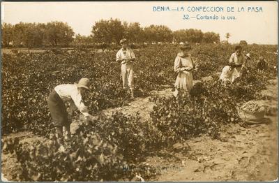 La Confección de la pasa [Material gráfico]: Cortando la uva : Denia.