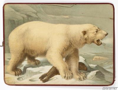 plansch, skolplansch, Isbjörn