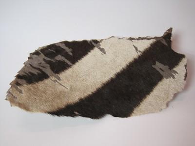 Huid van een exemplaar van Equus sp. (Zebra).