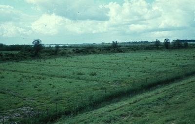 Zuid-Holland/Noord-Brabant: Biesbosch. In grasland omgezette griend.