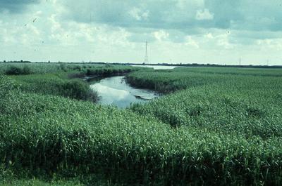 Zuid-Holland/Noord-Brabant: Biesbosch. Grote kreek in gors.