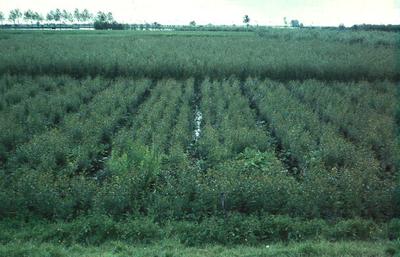 Zuid-Holland/Noord-Brabant: Biesbosch. Greppelsysteem in grind.