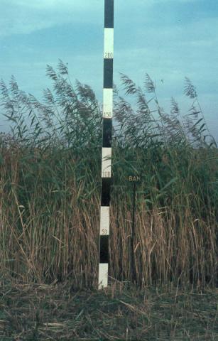 Noord-Brabant: Ossendrecht. Proefvelden.