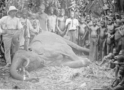 kongoleser, elefant, fotografi, photograph@eng
