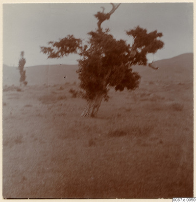 träd, bikupor, fotografi, photograph@eng