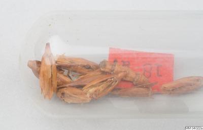 Omnia Neolithicum 4500 B C Ca