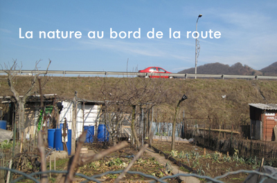 La nature au bord de la route :