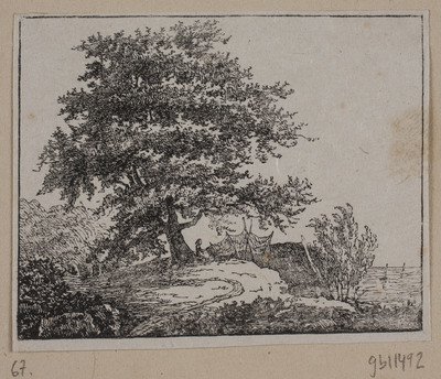 Træ på en skrænt ved havet