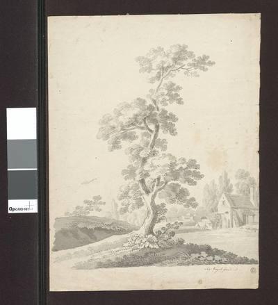 Krajobraz. Samotne drzewo