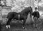 horse (Owen)]