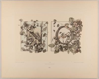 XIII. Initiale N O mit Fächer und Ginkgo - Dorn, Eberesche und Früchten
