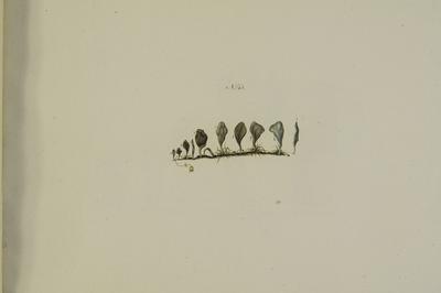 Arrhenia cf. glauca/spathulata