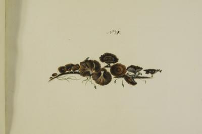 Thelephora caryophyllea Schaeff.: Fr.