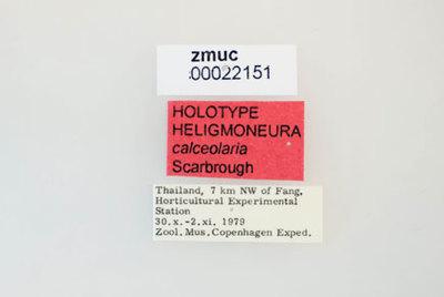 Heligmoneura calceolaria Scarborough 2004