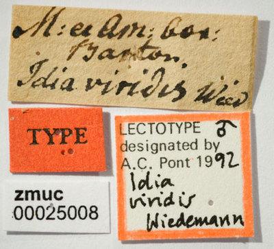 Neomyia cornicina (Fabricius 1781