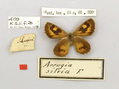 Papilio silvius Fabricius 1787