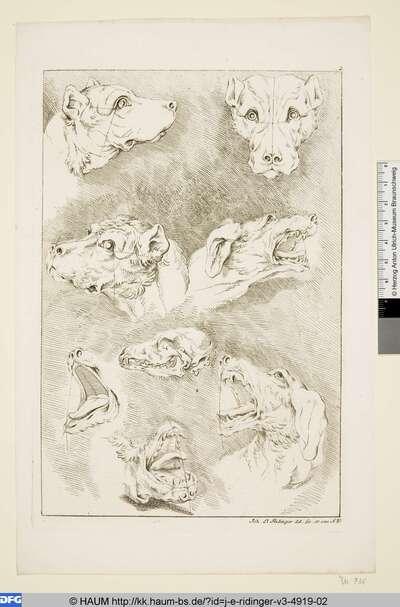 Acht Hundeköpfe