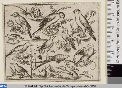 Elf Vögel, links oben ein Schmetterling