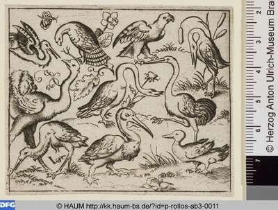 Zehn Vögel, links ein Strauß