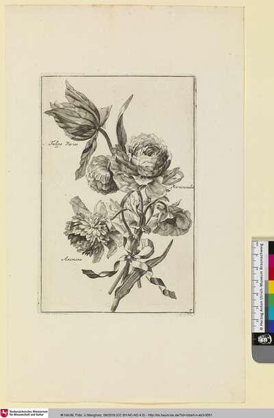 Tulipe Variee; Rernoncules; Anemone