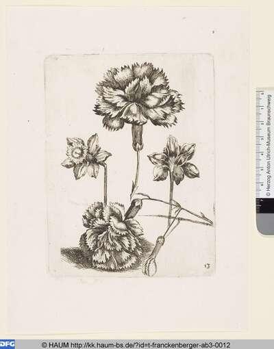 Blumen und Insekten