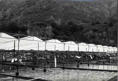 Salines de Gerri cobertes per un tendal